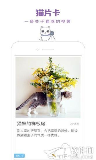 一日猫app下载安装