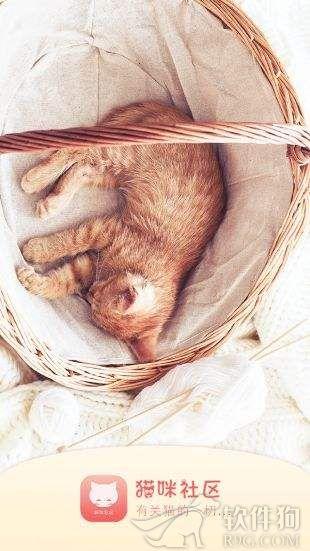 猫咪软件app社区安卓版下载
